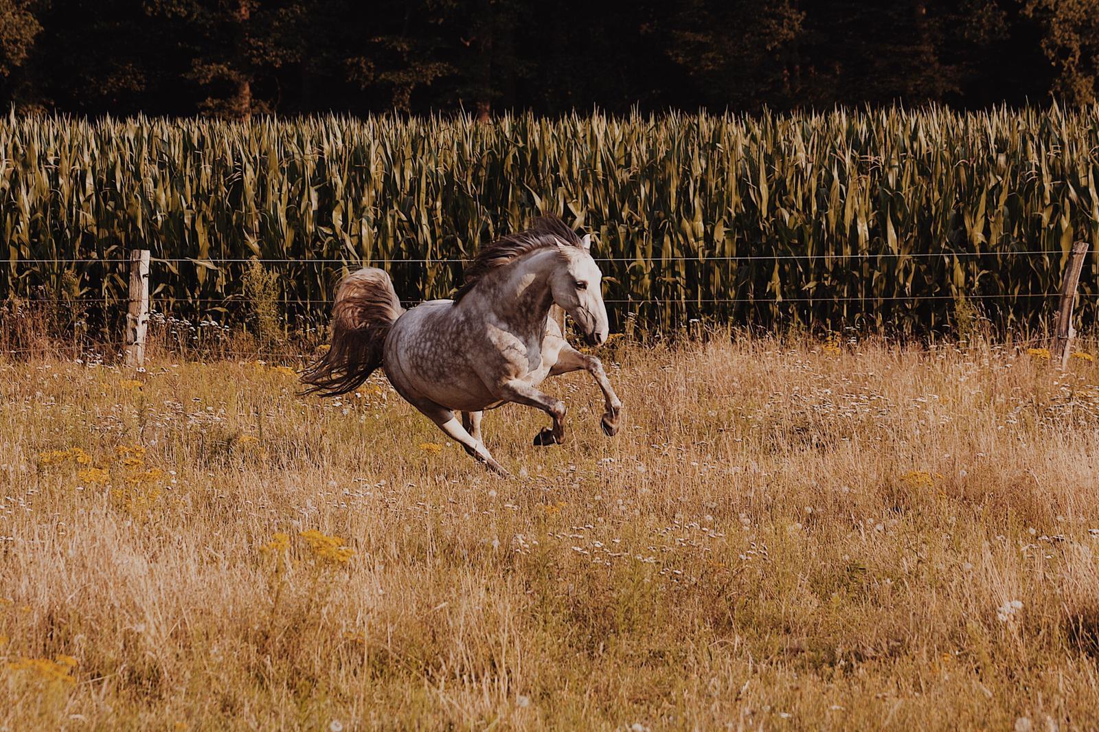 In den Herbstferien Ponyluft schnuppern
