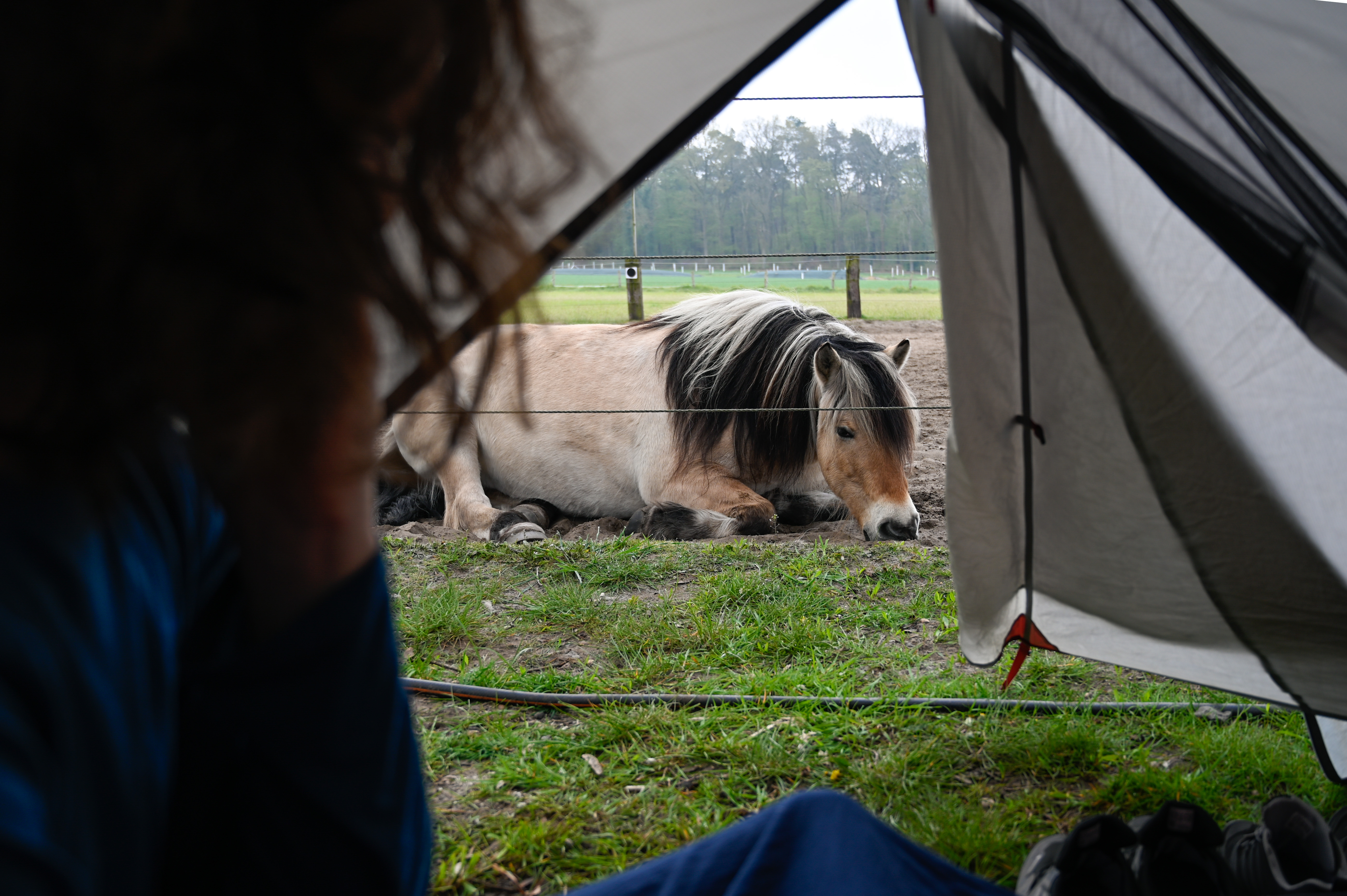 1 nite tent